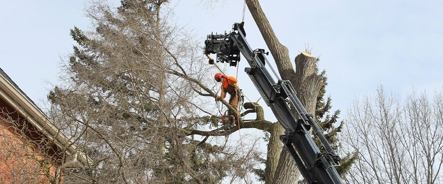 The Hazards of Tree Removal and Pruning