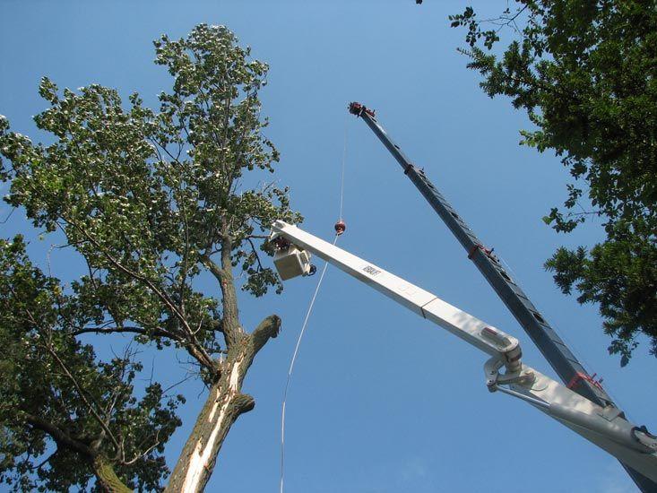 uts-tree-care-elevation