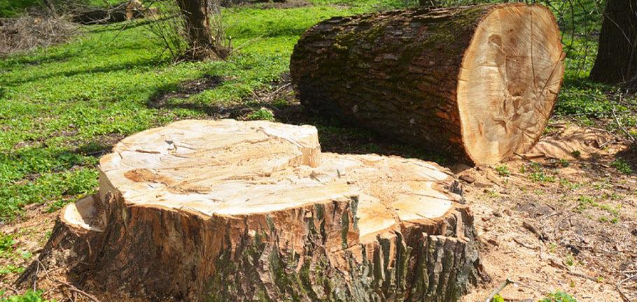 UTS Tree Care Stump Grinding
