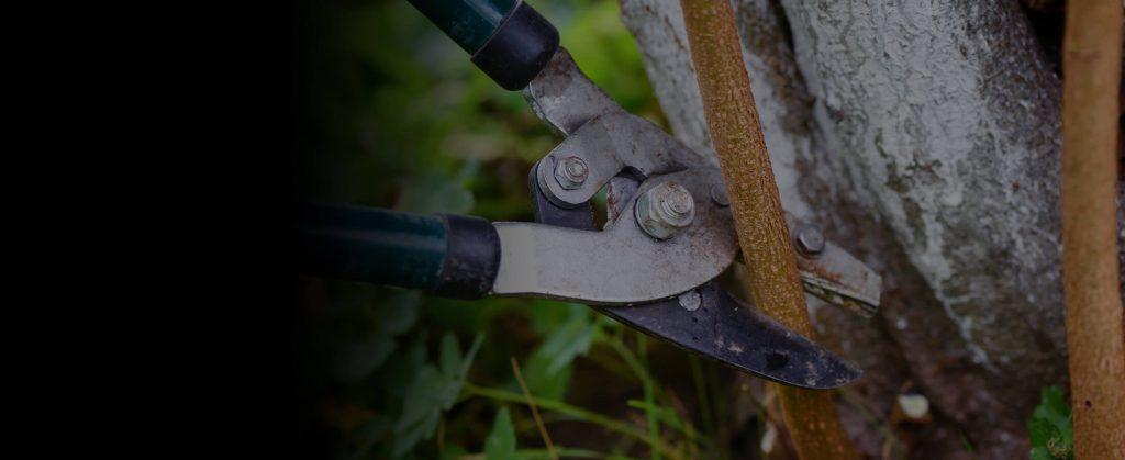 UTS Tree Care Tree Pruning Service