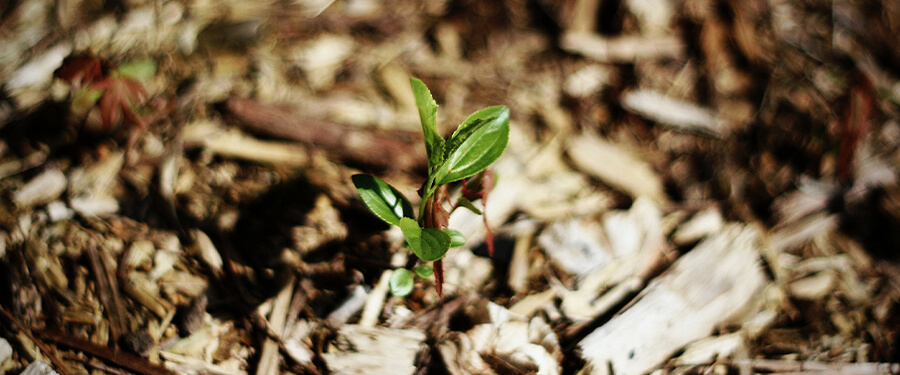 Ways You are Loving Your Trees to Death – Mulch
