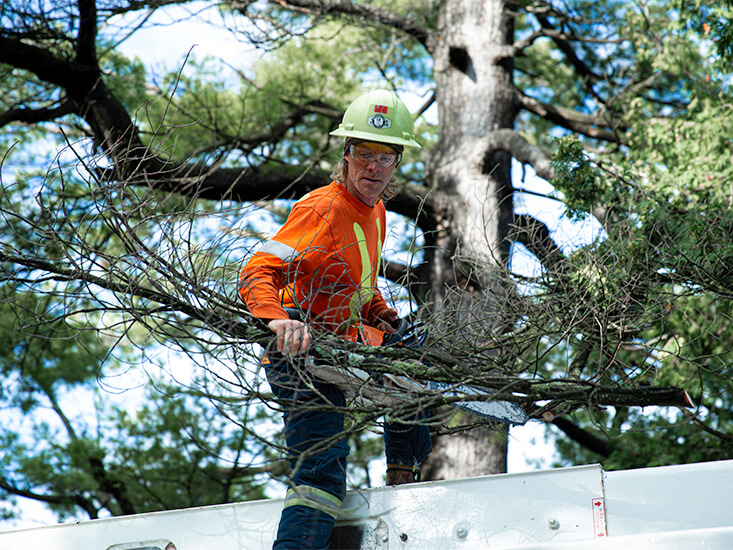 uts-tree-care-hp-services-03